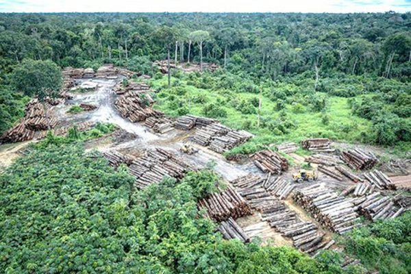 Lo ngại số phận rừng Amazon dưới thời ông Bolsonaro