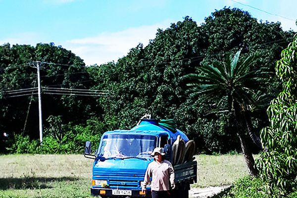 Xã Cam Hòa: Một hộ dân dùng chất thải hầm cầu để bón cho cây trồng