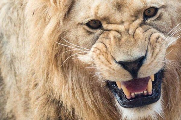 Nam Phi bắt giữ 6 người Việt do vi phạm quy định bảo vệ động vật