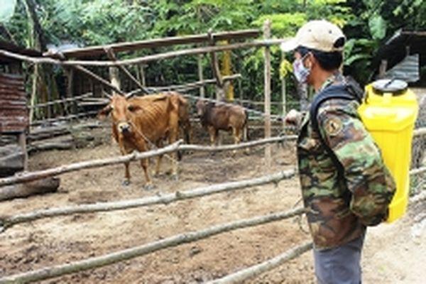 Chủ động phòng, chống dịch bệnh trên cây trồng, vật nuôi