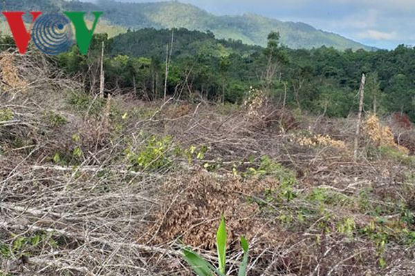 Khởi tố vụ phá rừng ở Gia Lai