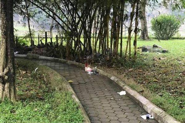 Vụ thi thể phụ nữ trẻ bán khỏa thân ở vườn hoa Hà Đông: 'Mọi người nghĩ là ma-nơ-canh'
