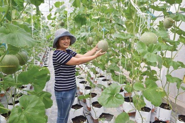 Tịnh Biên phát triển thế mạnh nông nghiệp đặc thù