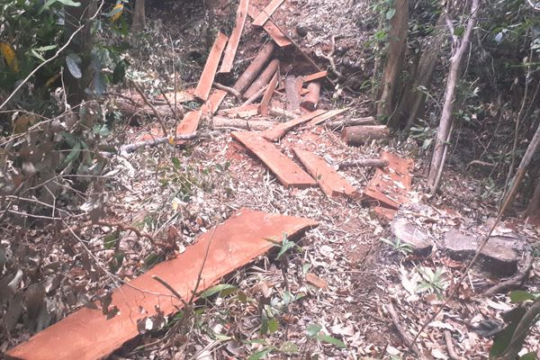 Bắt tạm giam một đối tượng trong 2 vụ phá rừng quy mô lớn dịp Tết
