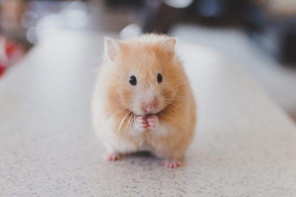 Quá choáng khi chuột biết xem đồng hồ?
