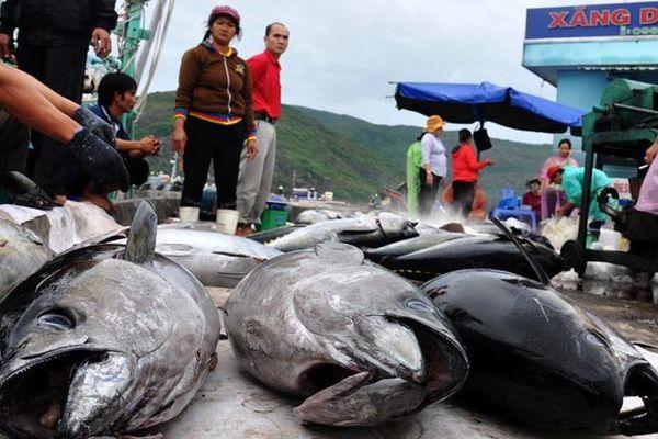 Doanh nghiệp lại kêu cứu vì container cá ngừ bị tắc ở cảng