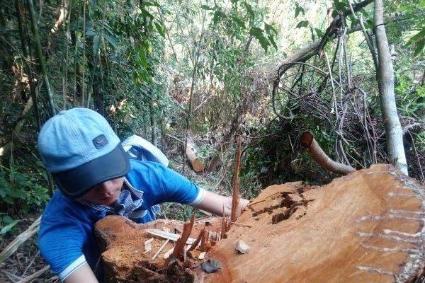 Thâm nhập, ghi nhận cận cảnh rừng thượng nguồn Tả Trạch bị lâm tặc thản nhiên 'xẻ thịt'
