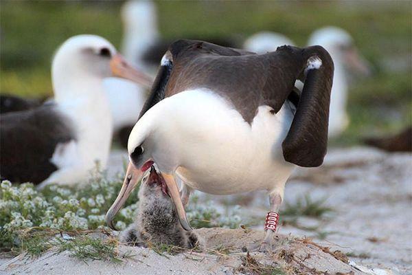 Sự thực bất ngò tuổi thọ của những con chim
