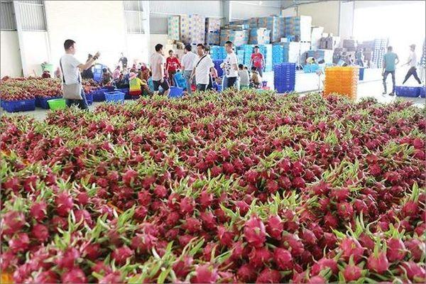 Giá trị xuất khẩu nhiều mặt hàng nông sản giảm mạnh