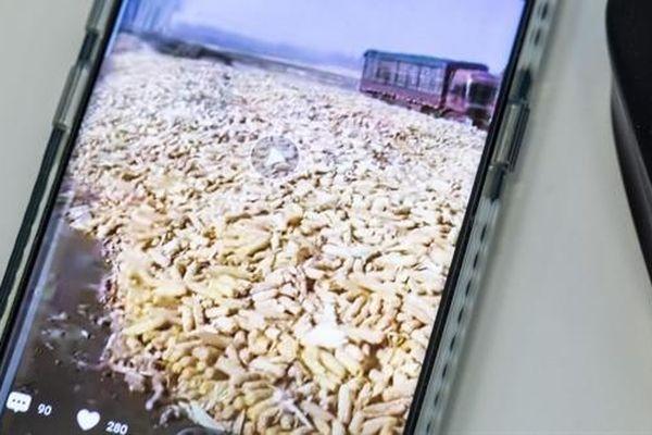 Nông dân Trung Quốc đua nhau livestream mùa vụ