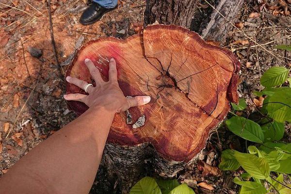 Đắk Lắk: Hàng chục ha rừng bị đốt, chặt phá ở huyện biên giới Ea Súp