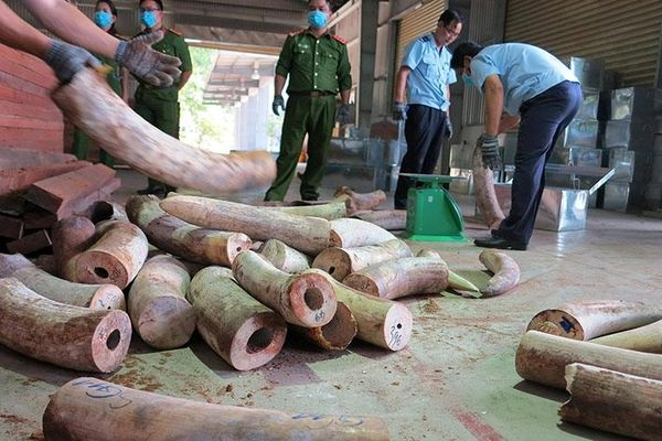 Thu giữ hơn chín tấn hàng hóa nghi là ngà voi