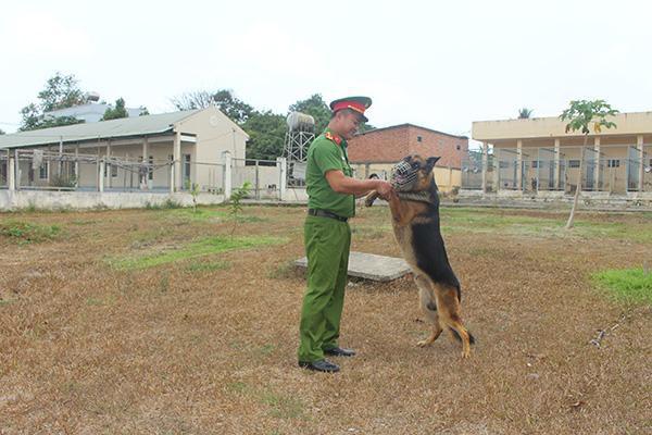 Gian nan nghề huấn luyện chó nghiệp vụ