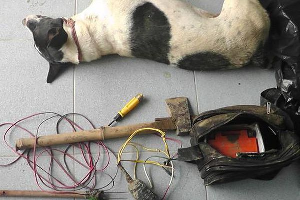 Đồng Nai: Bắt đối tượng đánh bả chó, trộm 30-40 con mỗi đêm