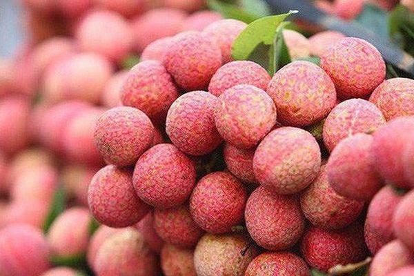 Vietnam PFA 2019 tìm kiếm cơ hội cho nông sản Việt Nam
