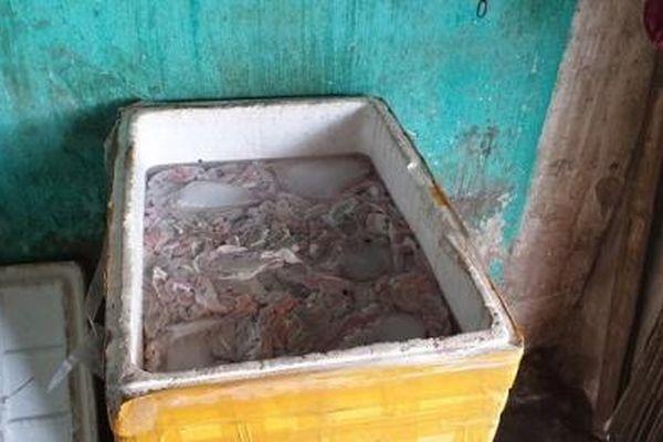 Tiêu hủy 300kg lòng lợn biến màu xanh, bốc mùi hôi thối