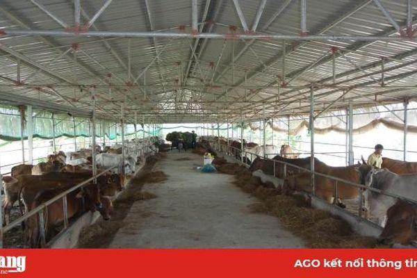 Khai thác thế mạnh ngành chăn nuôi
