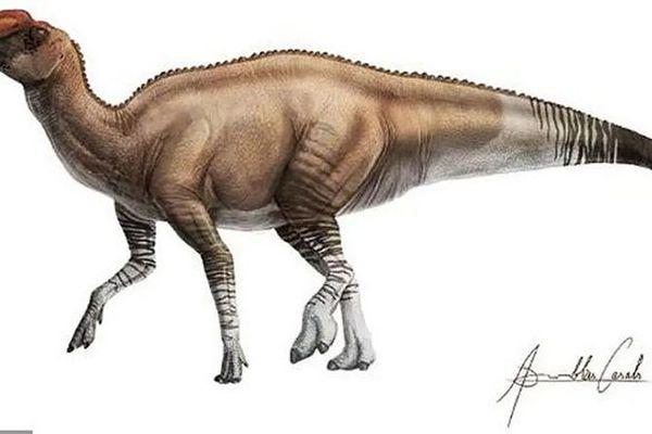 Phát hiện khủng long mỏ vịt 'dị' nhất lịch sử