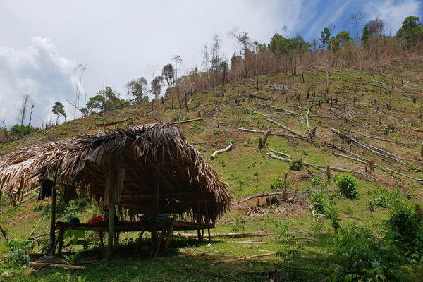 Nghệ An: 'Máu rừng' vẫn chảy ở đất Quỳ Châu