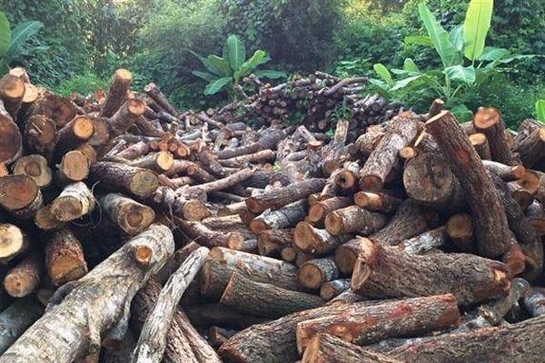 Cao Bằng: Thu giữ hơn 15m3 gỗ rừng tự nhiên