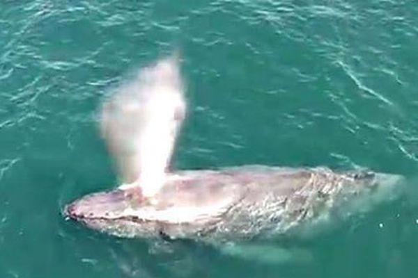 Vì sao cá voi phun nước trên đỉnh đầu?
