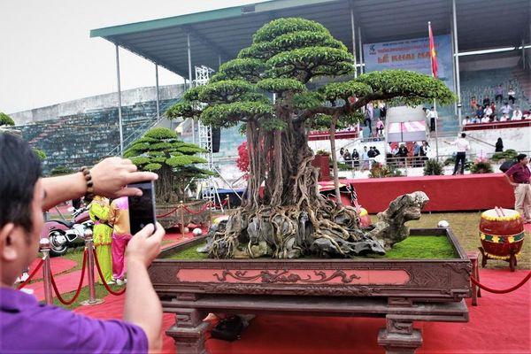 Ngắm Siêu cây tại sân chơi 'triệu đô' Triển lãm Phúc Thọ - Hà Nội năm 2019