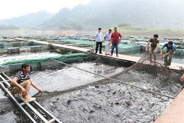 Tuyên Quang: Hướng làm giàu từ cá đặc sản