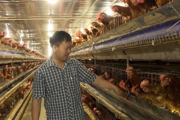 Quỹ Hỗ trợ nông dân: Kênh tín dụng thiết thực của nhà nông