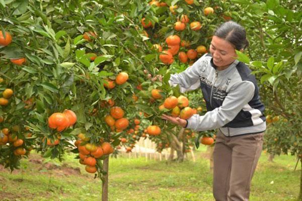 Nâng giá trị cho cây ăn quả