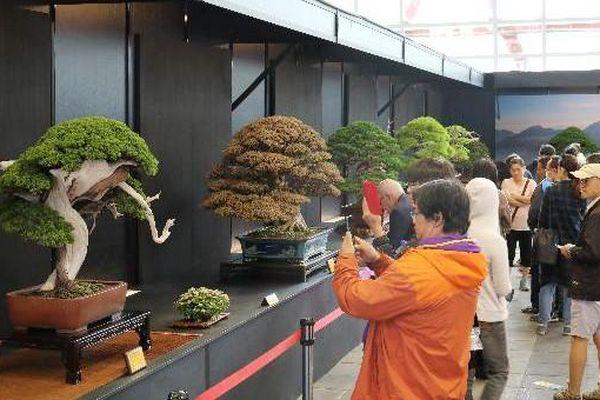 36 tác phẩm bonsai đoạt giải tại lễ hội Bonsai và Suiseki