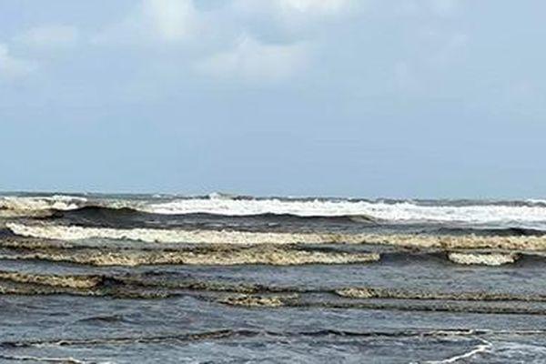Tìm nguyên nhân nước biển Quảng Ngãi chuyển màu nâu đen