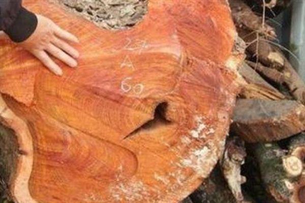 Lô gỗ sưa trăm tỷ lại ế: Do giá gỗ vẫn cao?