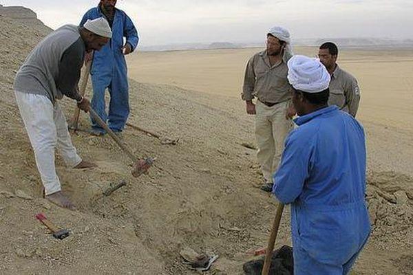 'Quái vật biến hình' 35 triệu tuổi lộ diện giữa sa mạc Ai Cập
