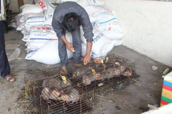 Vụ thú rừng chết dần trong kho hải quan: Thả thú về rừng, phạt tiền nhà xe