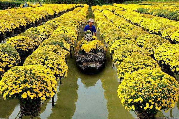 Nhiều sản phẩm hoa trái, cây cảnh sẵn sàng phục vụ Tết