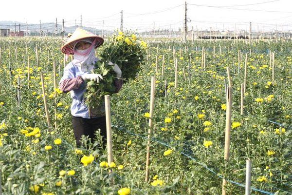 Tìm giải pháp ổn định cung cầu nông sản