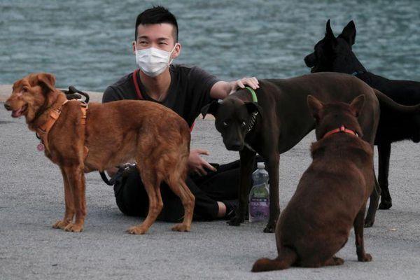 Thêm một chú chó nhà ở Hồng Kông dương tính với SARS-CoV-2