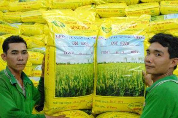 Doseco áp dụng bón phân vùi trong sản xuất lúa giống