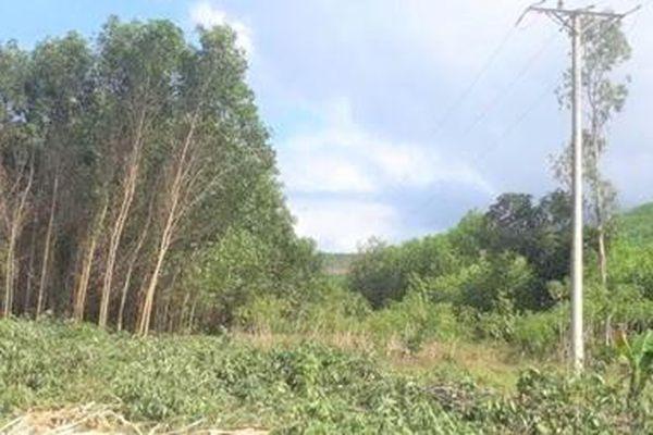 Kiên quyết ngăn chặn nạn phá rừng, săn bắt động vật hoang dã