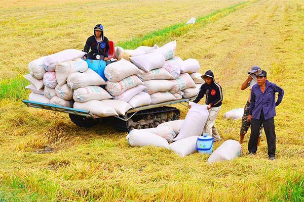 GS Võ Tòng Xuân: Đồng bằng sông Cửu Long thu ít nhất 4 triệu tấn gạo vụ hè thu