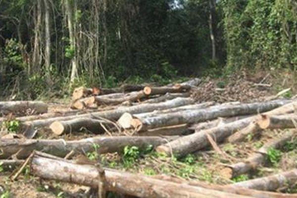 Kháng nghị giám đốc thẩm bản án xử bị cáo hủy hoại hơn 2,2 ha rừng ở Yên Bái