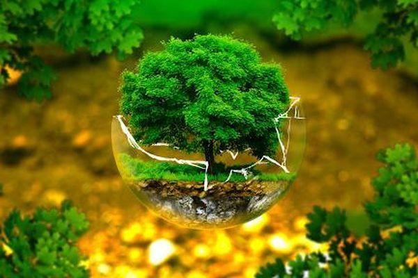 Hiệu quả kinh tế và môi trường của Quỹ Bảo vệ môi trường Việt Nam