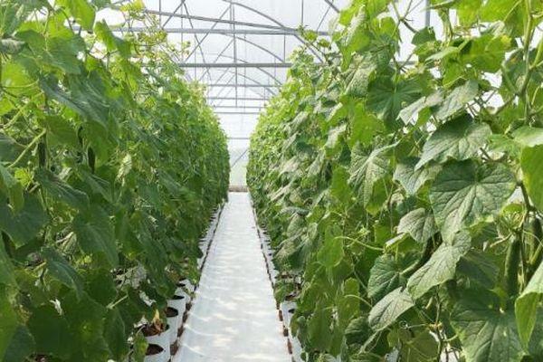 U60 làm nông nghiệp công nghệ cao