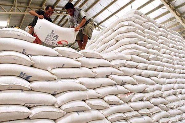 Đấu thầu lại gạo dự trữ: Nhiều nhà thầu bị loại thẳng cánh