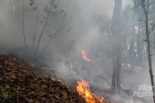 Hải Phòng: Cháy rừng tại núi Trà Phương