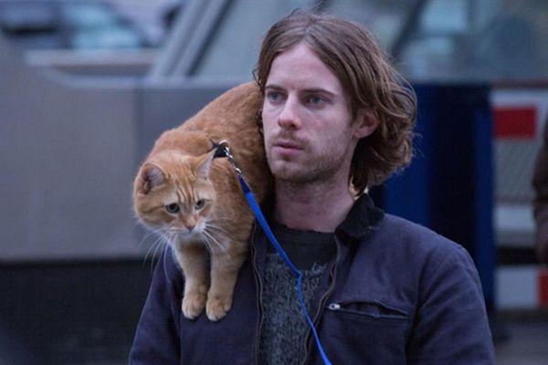 Chú mèo truyền cảm hứng cho 'A Street Cat Named Bob' qua đời