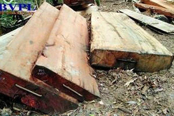 Vụ phá rừng quy mô lớn ở Đắk Lắk: Phê chuẩn khởi tố, lệnh tạm giam 2 đối tượng chủ mưu