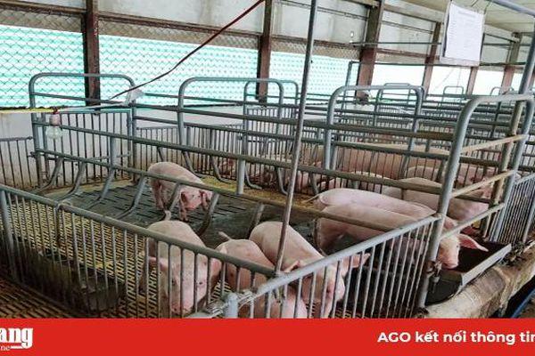 Đột phá phát triển chăn nuôi