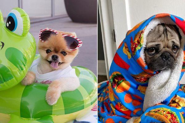 Những chú chó có hàng triệu người hâm mộ trên mạng xã hội