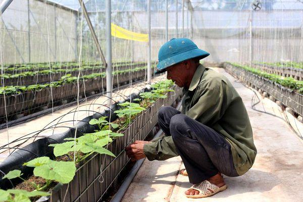 Phát triển bền vững vùng rau an toàn